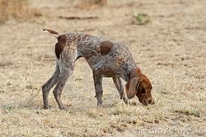 Scent/Nose Work Classes @ Animal Watchers & More | Huachuca City | Arizona | United States