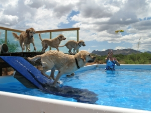 Dock Diving - Advanced @ Animal Watchers & More | Huachuca City | Arizona | United States