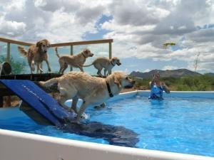 Dock Diving - Advanced @ Animal Watchers & More | Huachuca City | Arizona | United States