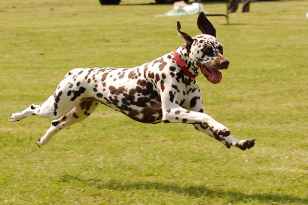 Benefits of Pet Boarding